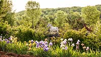 View of Arab horses beyond the flowering iris nursery fields of Les Senteurs de Quercy - May, France