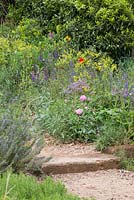 A Perfumer's Garden in Grasse by L'Occitane. Detail of rustic gravel and sand path with step. Plants on either side include rosemary - Rosmarinus officinalis, Rosa centifolia, borage - Borago officinalis, woad - Isatis tinctoria, Salvia with orange - Citrus