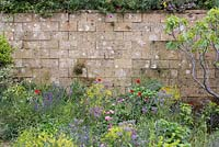 A Perfumer's Garden in Grasse by L'Occitane. Detail of weathered block wall with planting in front. Including Rosa centifolia, borage - Borago officinalis, dyer's woad - Isatis tinctoria, and field poppies - Papaver rhoeas, Fig - Ficus carica