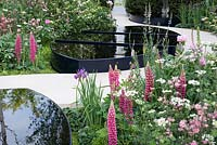 Soft pink planting of Lupinus, Aquilegia and Paeonia with Orlaya grandiflora surround black water pools - The Breakthrough Breast Cancer Garden, RHS Chelsea Flower Show 2015