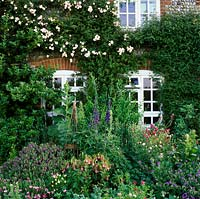 View of cottage. Rosa 'Felicity Perpetue' on wall, Hebe x franciscana 'Blue Gem', Campanula takesimana 'Elizabeth', delphiniums, mixed knautia