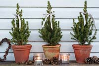 Small evergreen miniature Christmas trees in pots decorated with ribbons, tealights and cones
