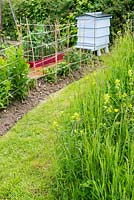 Wildflower area in small garden with staked herbaceous perennial border and traditional beehive.