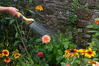 Watering border with hose especially in dry areas near walls