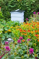 Summer flower border beside vegetable plot of Heleniums and Monarda with traditional beehive in background.