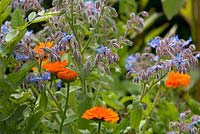 Borago officinalis and Calendula
