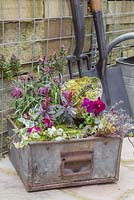 Vintage metal container planted with Viola, Thyme, Ivy, Moss, Fritillaria, Hebe and Euphorbia