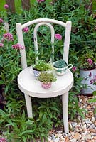 Alpines in cups on vintage childrens chair