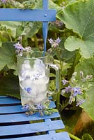 Borage ice cubes on painted blue chair in summer