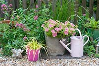 Patio containers in summer - Petunia surfinia 'Green Edge Pink', Carex 'Everillo' pink valerian, grasses
