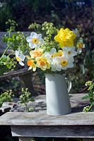 Cornish daffodils in enamel jug on garden table