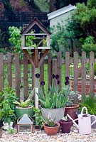 Garden view from patio with bird table and pots Tulipa 'Queen of Night' in galvanised container
