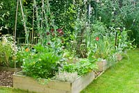 Vegetable beds in summer with mixed veg, herbs and flowers