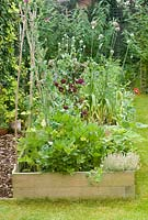Vegetable beds in summer with mixed veg herbs and flowers