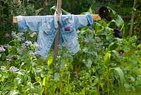 Scarecrow in vegetable bed in summer with chard, borage and sweetcorn