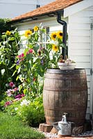 Just Retirement: A Garden For Every Retiree, A wooden barrel used as a water butt surrounded by Helianthus and Cosmos flowers. Designer: Tracy Foster Sponsor: Just Retirement Ltd
