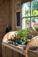 Just Retirement: A Garden For Every Retiree, view of shed interior with wooden potting bench and worktable with herbs, tools, pots and propagation equipment in a shed. branches surrounded by - Designer: Tracy Foster Sponsor: Just Retirement Ltd