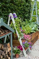 Old wooden painted step ladder used to display pots of campanula, diascia, petunias, violas, pelargoniums and houseleeks.