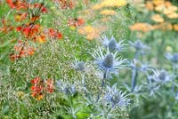 Detail of herbaceous bed with Eryngium 'Oliveranium', Helenium 'Moerheim Beauty', Deschampsia cespitosa 'Waldschatt' and Achillea 'Terracotta'