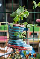 Dig the City Manchester 'Friendly Fences' by Planit-IE LLP and Pendleton together. Idiosycratic garden feature. A child's welly boot turned into a pot.