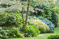 Shadow planting under a variegated dogwood next to meandering grass path, 'Gypsy Rose' Hosta, Bergenia, Cornus controversa 'Variegata', Hakonechloa macra 'Aureola', Lonicera pileata and Ophiopogon planiscapus 'Nigrescens'