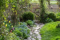 Paved garden path to wooden gate and box spheres, Buxus, Myosotis, Narcissus