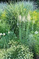 Detail from the pale border with Chrysanthemum 'Poesie', Hemerocallis 'Gentle Shepherd', Miscanthus sinensis 'Gold Bar',  Veronicastrum virginicum 'Diana'