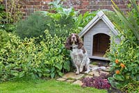 Pet dog sitting by kennel with a green living roof created using sedum matting. York stone path featuring Soleirolia soleirolii syn. Helxine soleirolii