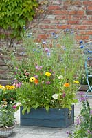 Summer flower meadow in a wooden box with Calendula, Zinnia, Centaurea and Malva