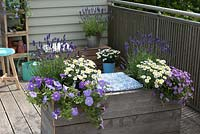 Self-made planter with integrated bench: Petunia 'Sky Blue', Argyranthemum, Lavandula 'Hidcote Blue' and Brachyscome 'Brasco Violet'