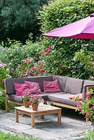 Corner sofa on a small terrace framed by rose bushes.  A parasol gives shade and behind is a hedge of Carpinus - hornbeam as a screen.