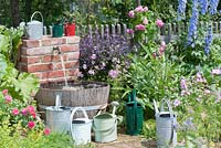 Barrel and tap for irrigation in cottage garden. Summer. Planting includes, Rosa, Sidalcea, Cynara scolymus - artichoke, Delphinium - Larkspur and Ocimum 'African Blue', watering cans.