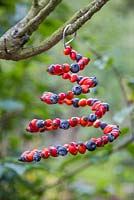 A natural spiral Bird Feeder made with Blueberries and Rose hips