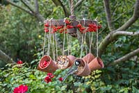 Parus Major - Great tit feeding.  A weathered metal wheel bird feeder featuring hanging terracotta pots offering a variety of berries and seeds for the birds, decorated with Pyracantha berries
