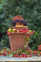 A Berry Bird Buffet. Constructed by stacking Terracotta pots and using wild Crab Apples, Rose hips, Prunus spinosa, Elderberries, Hawthorn berries and Pyracantha