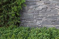 Detail of Buxus sempervirens and Taxus baccata hedge next to dry stone slate wall