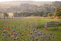 Bench overlooking countryside views and wildflower meadow with Phacelia tanacetifolia, Chrysanthumum, Centaurea cyanea and Papaver rhoeas - field poppy. Follers Manor, Sussex. Designed by: Ian Kitson
