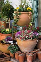 Terracotta containers with winter planting. Top: Erica 'Bing',  Cyclamen persicum, Stipa tenuissima, Cornus alba 'Sibirica', Primula vulgaris and variegated ivy. Bottom: Skimmia japonica 'Magic Marlot', Skimmia japonica, Cyclamen persicum, Erica 'George Rendall', ornamental cabbage. Behind: Standard box ball, Primula vulgaris.