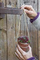 Attach the potted Sempervivums to the cast iron wheel, keeping them equally spaced apart