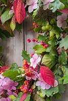 Detail of materials used for autumnal wreath. Featuring Oak - Quercus robur, Spindle - Euonymus and Hydrangea flowers