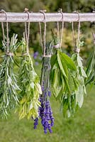 Drying a selection of herbs outside on a wooden beam. Rosemary, Oregano, Lavender and Bay leaves