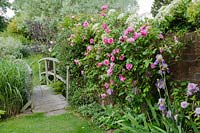 Footbridge over a stream, climbing pink Rose 'Gertrude Jekyll' with bearded Iris and Clematis - Old Smithy, Dorset
