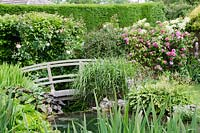 Footbridge over a pond, climbing pink Rose 'Gertrude Jekyll' with bearded Iris - Old Smithy, Dorset
