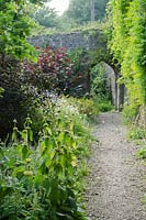 Path leading through wall to bottom cutting patch, with Phlomis russelliana in foreground and Corylus avellana 'Red Majestic' - Purple Corkscrew next to wall - The Walled Garden at Mells, Somerset