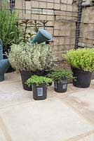 Plants required for creating a herb corner are Salvia officinalis 'Tricolor', Red Creeping Thyme, Chocolate Mint - Mentha x piperita 'Chocolate', Corsican Mint - Mentha requienii, Thymus vulgaris 'Silver Queen', Rosmarinus officinalis and Thymus x citriodorus 'Aureo'