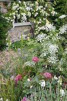 The Old Rectory, Kingston, Isle of Wight. Detail border with Ammi majus and Hydrangea 'Pink Annabelle'
