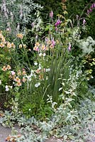 The Old Rectory, Kingston, Isle of Wight. Detail of border with Alstroemeria and Dierama