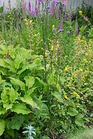 The Old Rectory, Kingston, Isle of Wight. Detail of border with Verbena bonariensis, Persicaria amplexicaulis, Mimulus
