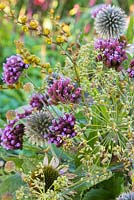 Autumnal bouquet detail of Verbena bonariensis, Echinops ritro and seed heads of Dill and Crocosmia