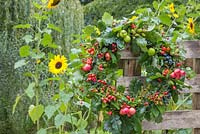 An Autumnal Berry wreath featuring Wild Crab Apples, Hawthorn - Crataegus, Sloe berries - Prunus spinosa, Rose hips, English Oak - Quercus robur and Crocosmia seed heads